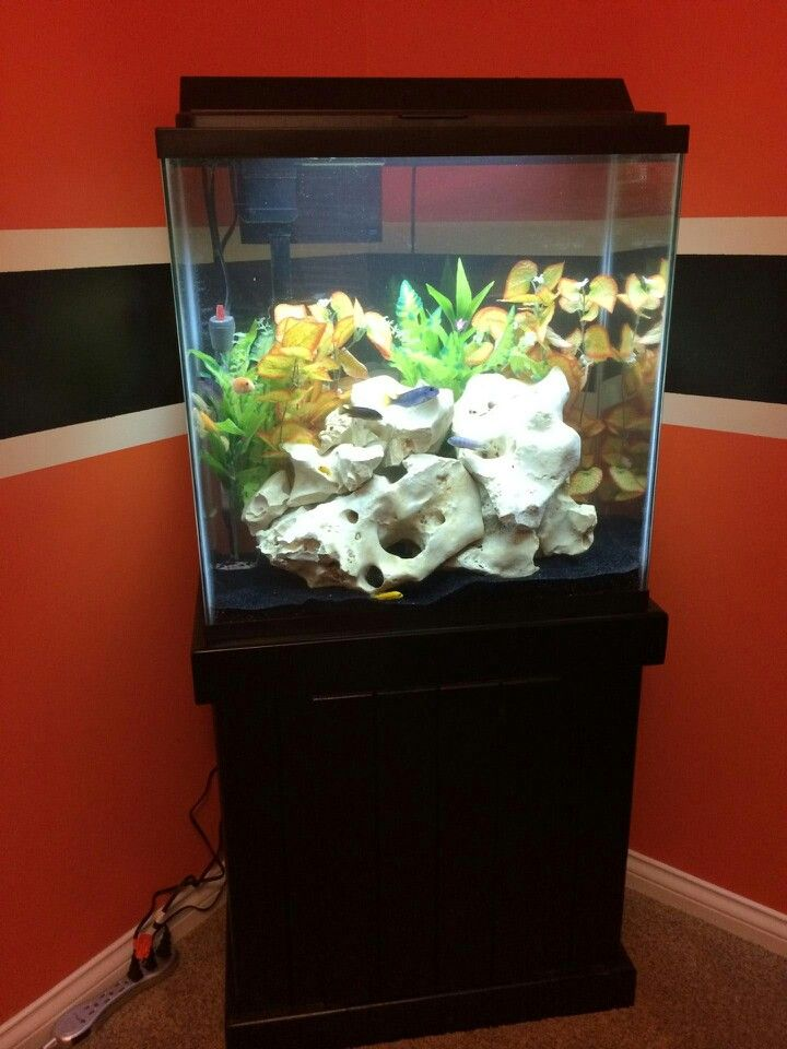 Not all of our clients choose to go big this 30 gallon for 200 gallon fish tank