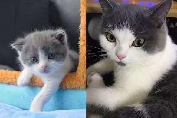 Pin On Anak Kucing