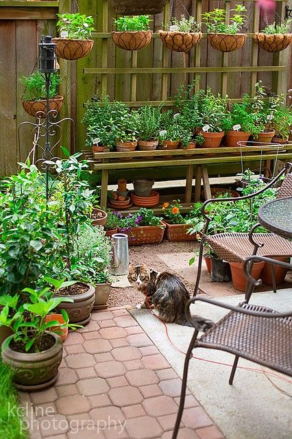 Bench stand garden with hanging plants.... I could plant veggies/herbs on my smaller side patio where the dogs can not disturb them
