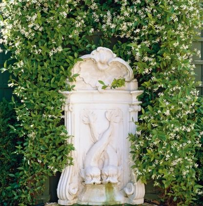 "Paul Bangay on the best plants for year-long flowers and how to have a garden in a small space: 7. Do you have a go-to plant that works in almost any space? If so what is it and why does it work so well?""Trachelospernum jasminoides , Star jasmine (pictured), works as both a great ground cover and climber, it tolerates wet and dry conditions and will grow in sun or shade. It's an amazing all round plant."" 8. Which is your favourite native Australian plant?""Syzygium spp. We use this is a…"