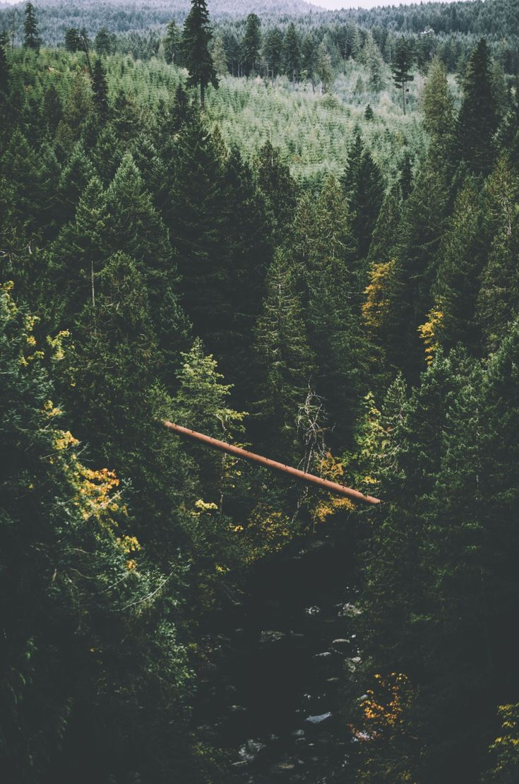Dare #forest #bridge