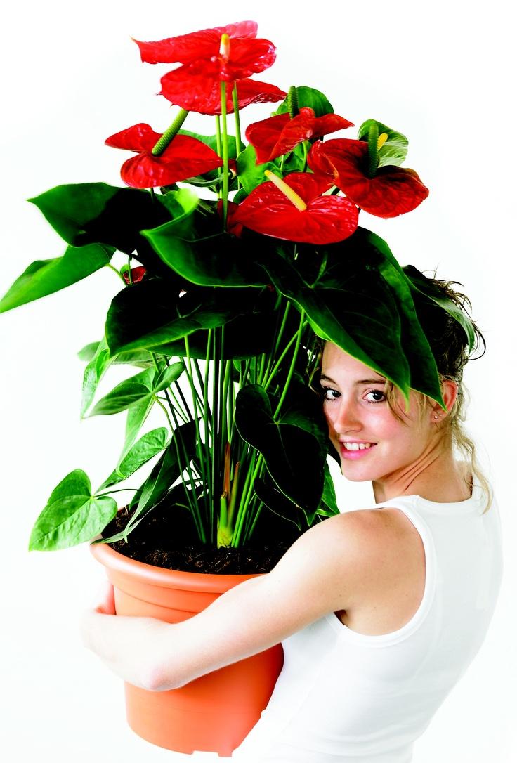 best GROENLAB Vintage Flowers images on Pinterest Beautiful