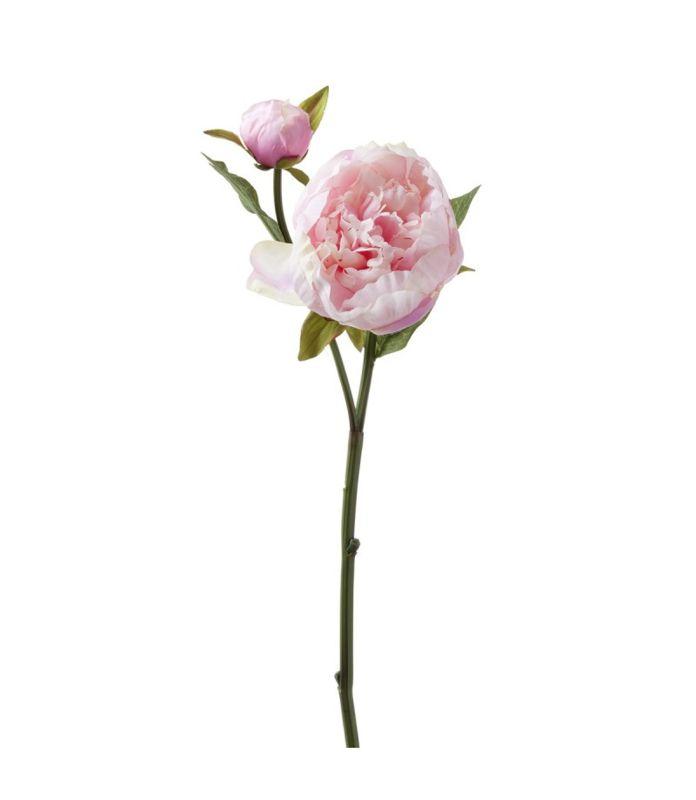 Peonie Nido 51 cm rose