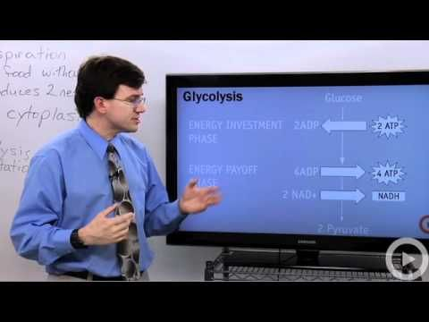 Anaerobic Respiration video-so wonderful for explinations