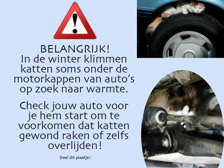 BELANGRIJK BERICHT!!!!  In de winter klimmen katten soms onder de motorkappen van auto's op zoek naar warmte.  Check jouw auto voor je hem start om te voorkomen dat katten gewond raken of zelfs overlijden ♥