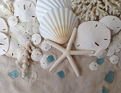 140 best beach decor diy images on pinterest bricolage recycling discover the best seashells starfish and sand dollars that you can use for do it yourself diy projects and crafts around your beach home solutioingenieria Gallery