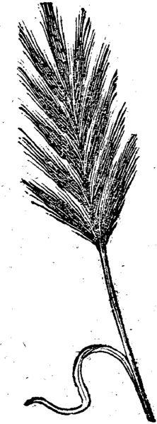 Calendrier liturgique romain : Quirinalia et Fornacalia