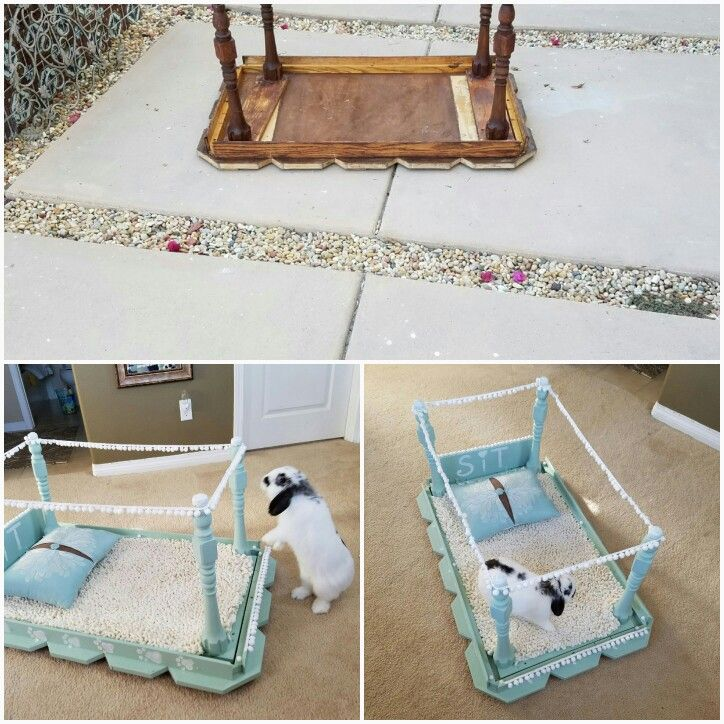 Pet bed out of coffee table.