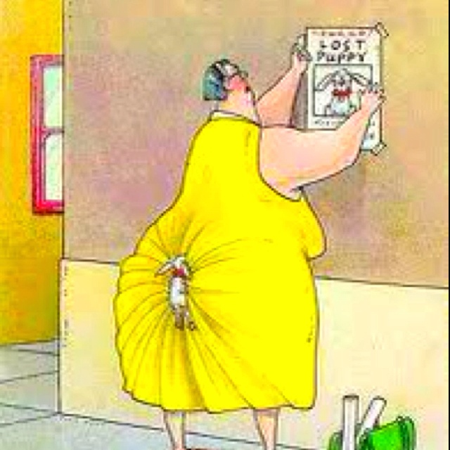 FunnyLittle Puppies, Halloween Costumes, Lost Puppies, Funny Cartoons, The Far Side, Dogs Humor, Funny Stuff, Poor Dogs, So Funny