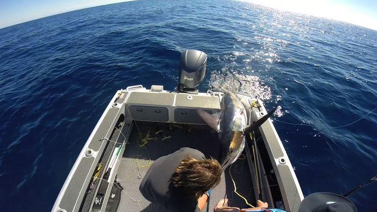 Catching Marlin WHAKATANE New Zealand