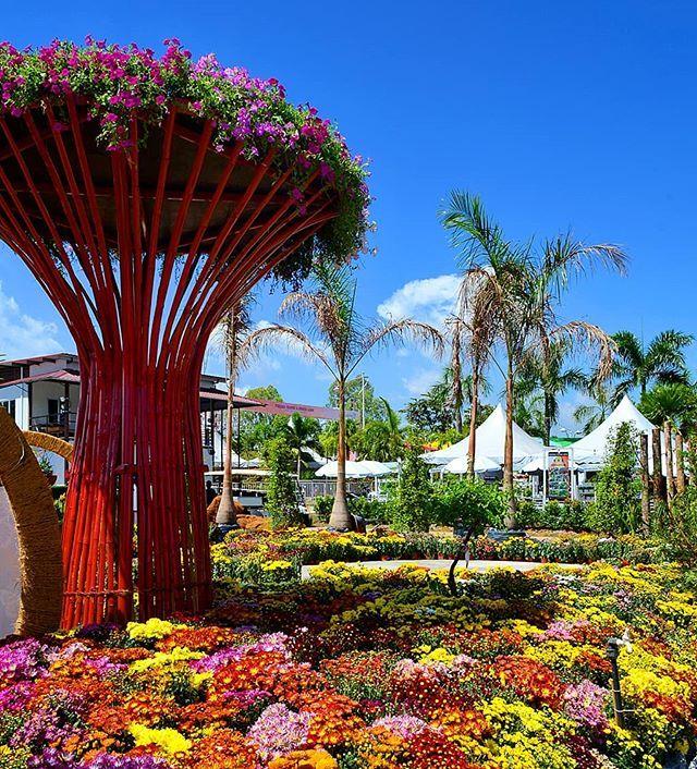 41d0b6ec981cd2fb2661d0e39c31a122 - Captions For Gardens By The Bay