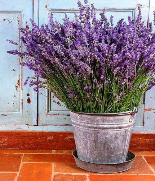 Lavender bucket