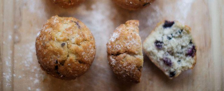 Premier Protein powder Blueberry Power Muffins