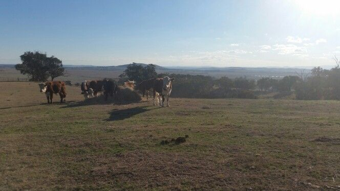 Beautiful view for beautiful girls #cows #holiday #Whittlesea #upperplenty #retreat #accommodation #farmstay #family #couples #farming #farm