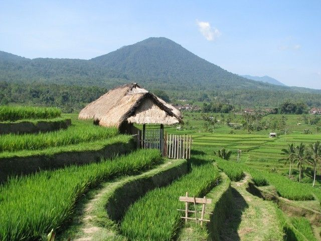 Home - The Pulse of Bali
