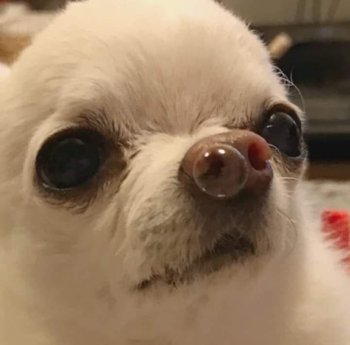 Twitter Memes Perros Memes Divertidos Memes De Perros Chistosos