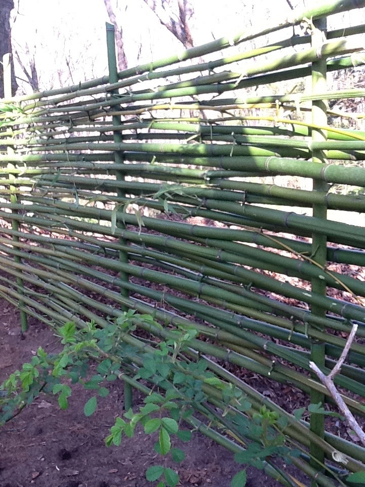 Bamboo Fence Idea. Could Also Be Used As Woven Wattle Type Edging.