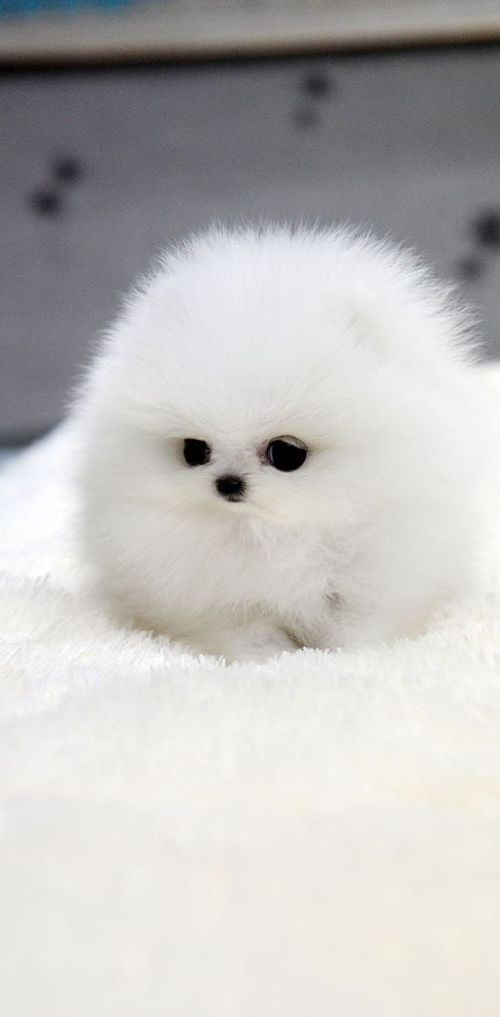 pretty sure this adorable little guy is a dog...