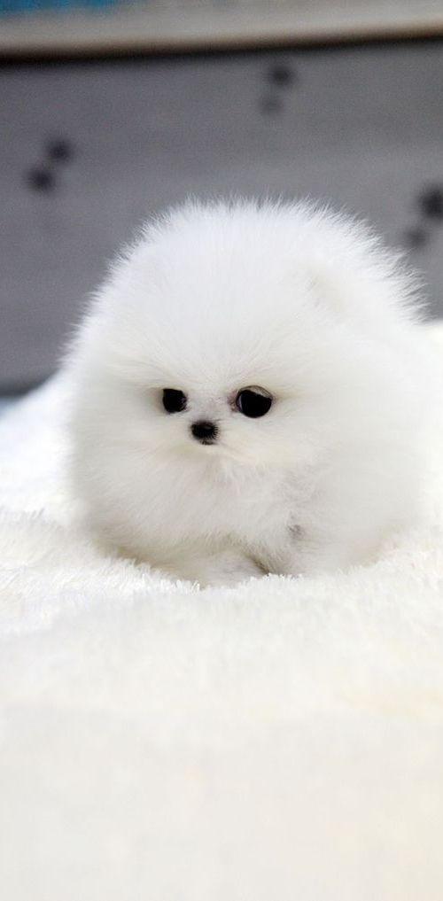 perros cachorros adorables (18)