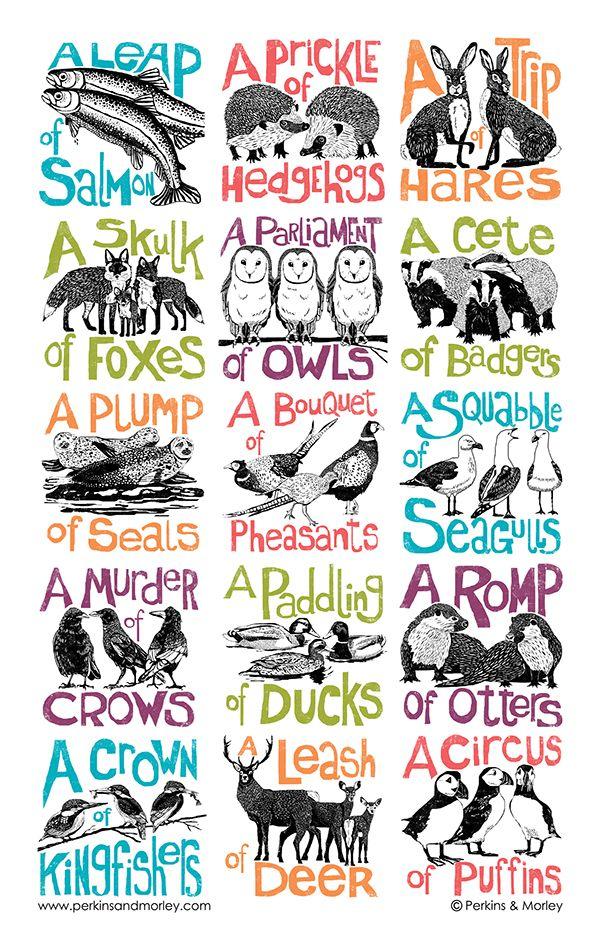 collective nouns                                                                                                                                                                                 More