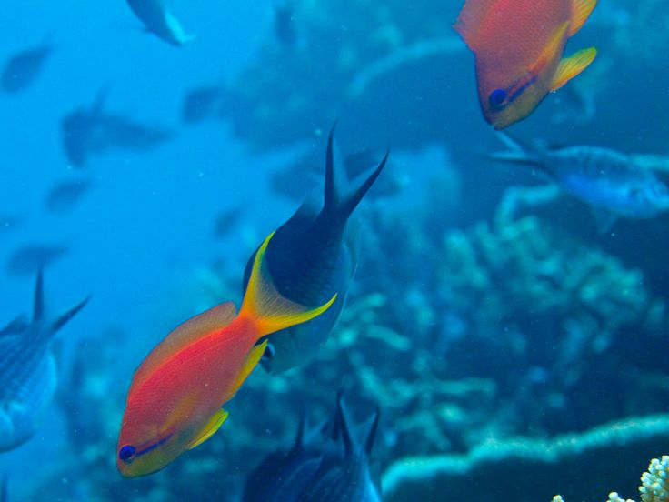 Some pretty #fish swimming around while #divers float by