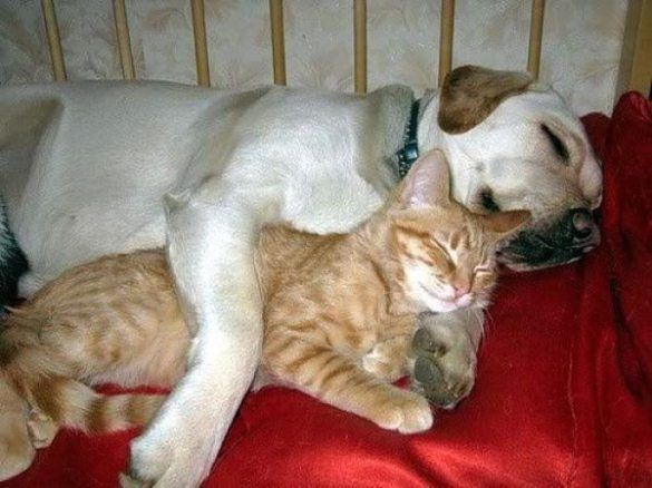 dog and cat sleep together | Four Legs & Fur | Pinterest