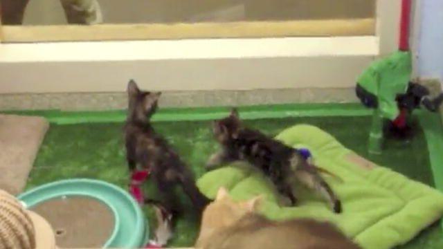 Cute Kittens | Too Cute | Animal Planet