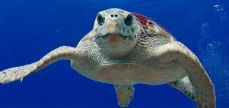 """Résultat de recherche d'images pour """"photo de tortue"""""""