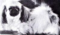 Les pedigrees des étalons et chiens de race Pekinois en tous departements (France) inscrits sur Chiens-de-France et atara.com.