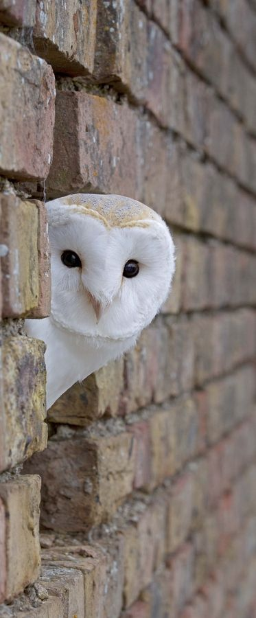 #whiteowl so cutee!!! Note: Example of linear background receding behind subject creates