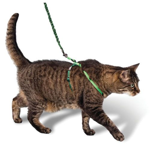 Best Harness Cats