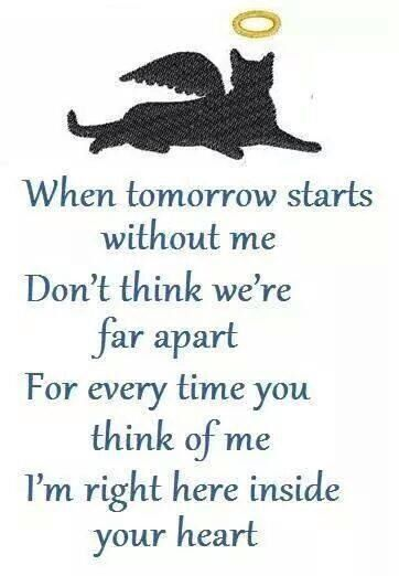 For my Millie...Where ever you are...i miss you