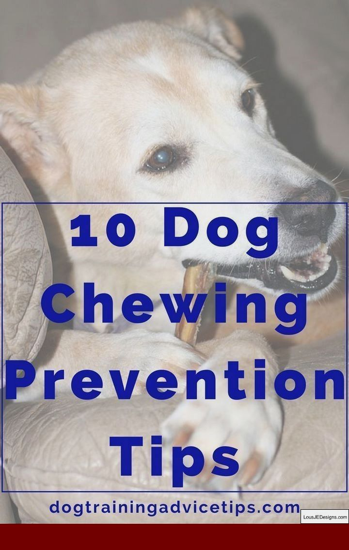 How To Train Your Dog To Walk Better On A Leash And Pics Of How To