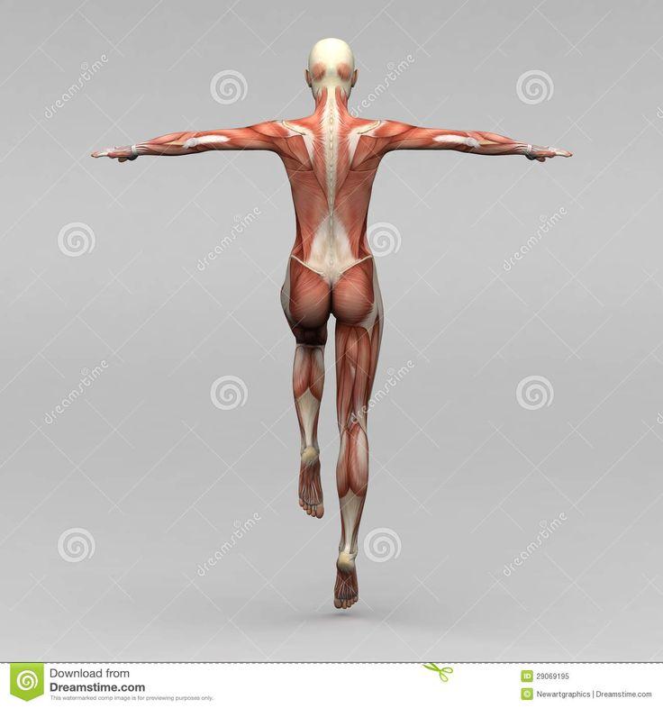 Mejores 74 imágenes de Espalda / back en Pinterest | Anatomía humana ...