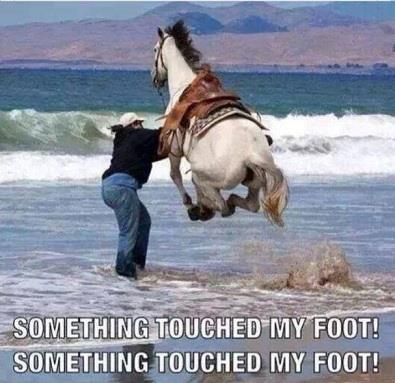 LOL!!!!!!! EVERY TIME I go in the ocean!!!!