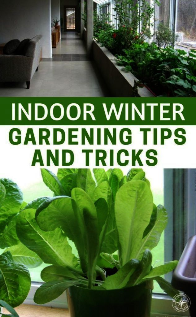 Garden Landscaping Ideas Malaysia Save Gardening Tips For Tomatoes