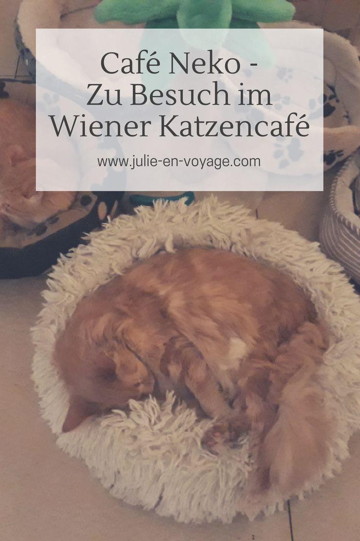 Ich war erstmals im Wiener Katzencafé und berichte euch in diesem Blogbeitrag ausführlich davon. :) #katzencafe #wien #cafeneko #neko #reiseblog