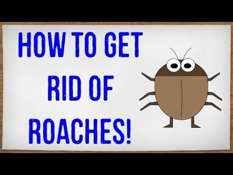 get rid of roaches cars roaches and how to get. Black Bedroom Furniture Sets. Home Design Ideas