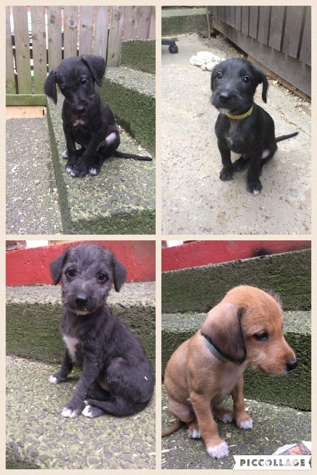 Biggy puppies For Sale in Houghton Le Spring, Tyne & Wear   Preloved