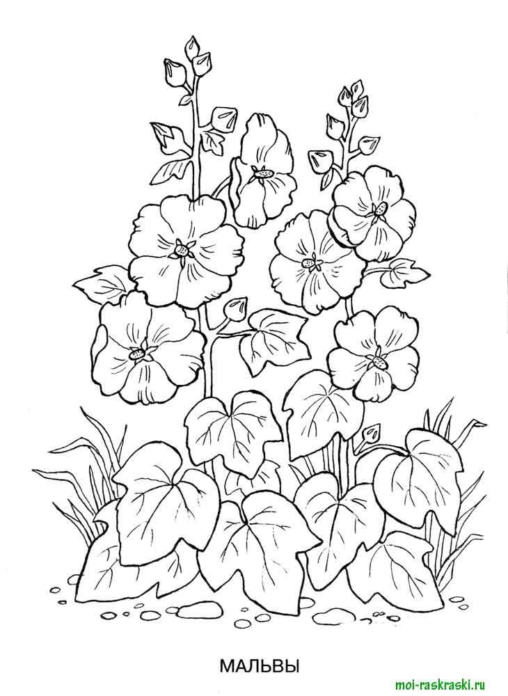 красота растений картинки карандашом