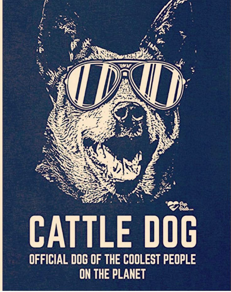Cattle dog owners are the coolest people