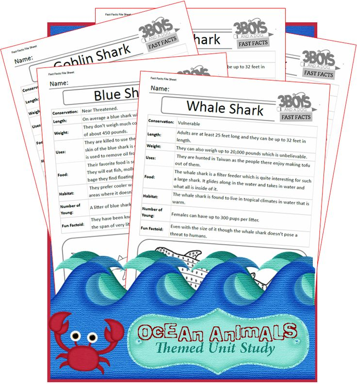 Check out the newest post (Shark Week Fast Facts Ocean Animals Unit Study) on 3 Boys and a Dog at http://3boysandadog.com/2014/08/shark-week-fast-facts-ocean-animals-unit-study/?Shark+Week+Fast+Facts+%7BOcean+Animals+Unit+Study%7D