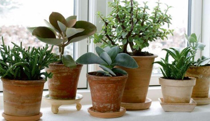 Vindueskarm med planter i forskellige højder og bladtyper