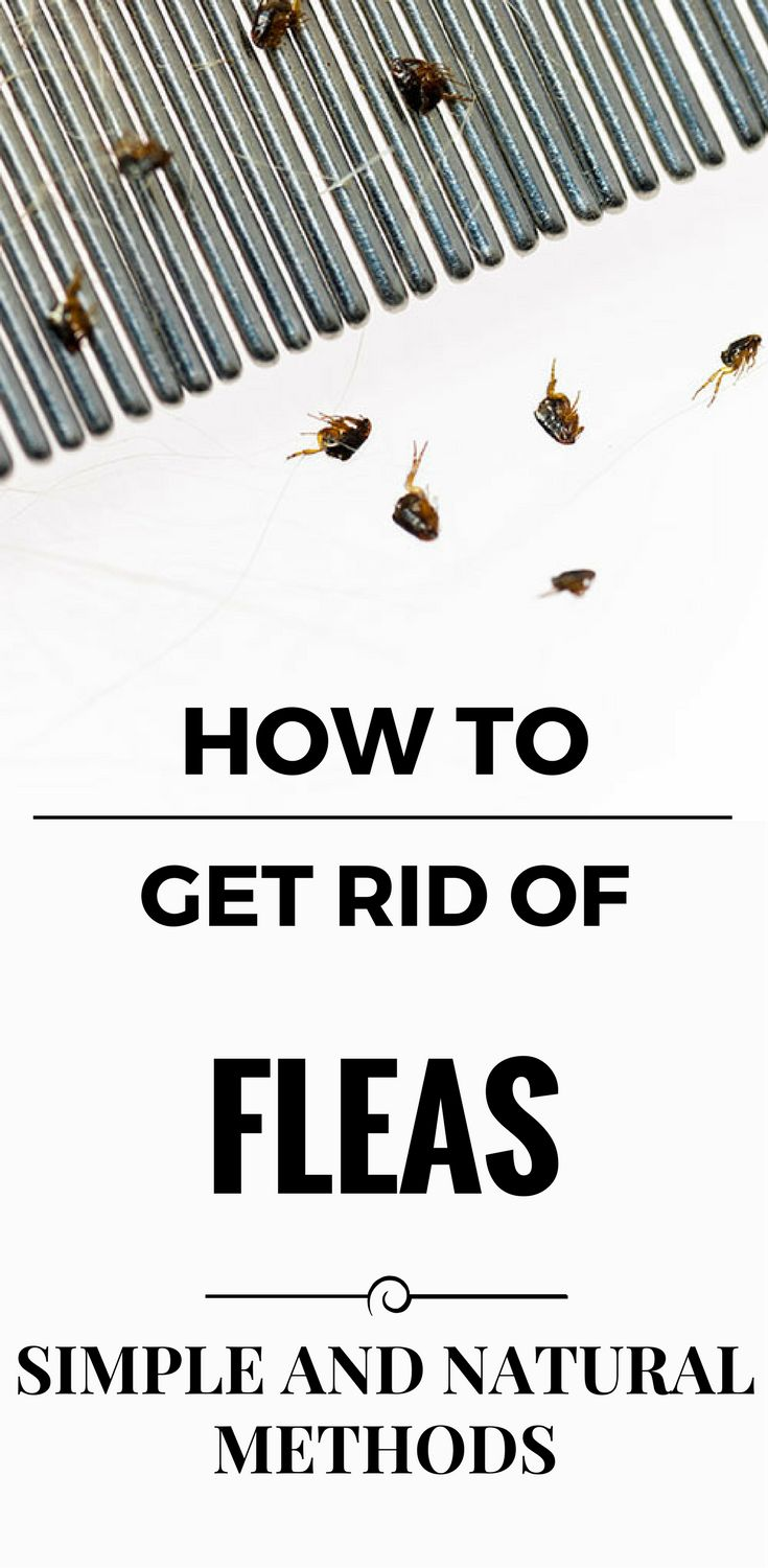 How To Get Rid Of Fleas   Simple And Natural Methods