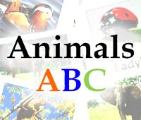 The animals shown in set of cards includes : Antelope, Bee, Camel, Duck, Elephant, Frog, Giraffe, Horse, Iguana, Jaguar, Koala, Ladybird, Monkey, Nightingale, Owl, Penguin ...