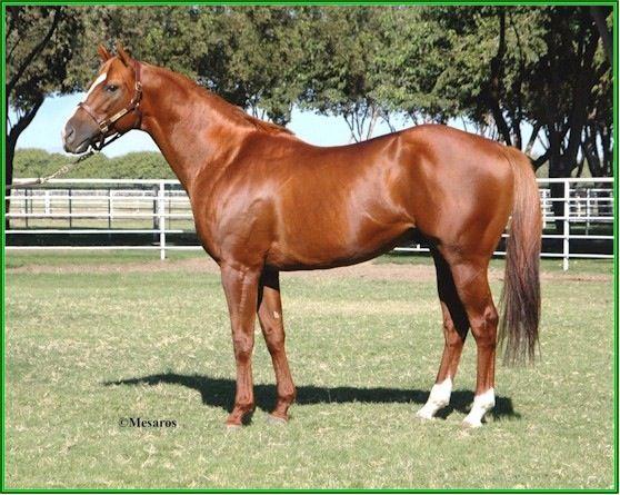Lucky Pulpit, sire of 2014 Kentucky Derby winner, California Chrome. (Man O' War lineage)