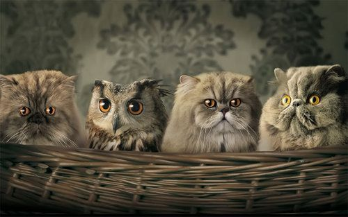 Me thinks there is a spy among us…..: Cat Food, Baby Owl, Hidden Pictures, Baby Animal, Dr. Who, Desktop Wallpapers, Funny Animal, Photo, Persian Cat