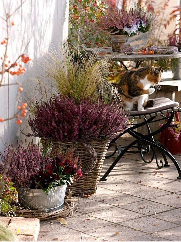 Pretty pots of heather with colorful bloom and foliage on the terrace.
