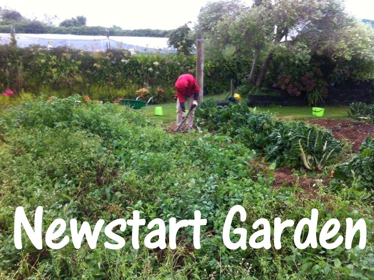 Newstart Garden grows organic food to be given to people in need. Some produce is sold to fund running costs. Owned by SDA church run by volunteers. https://www.facebook.com/NewstartGarden2015/home