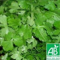 Persil Géant d'Italie Bio - Variété aux grandes feuilles plates qui parfument agréablement.